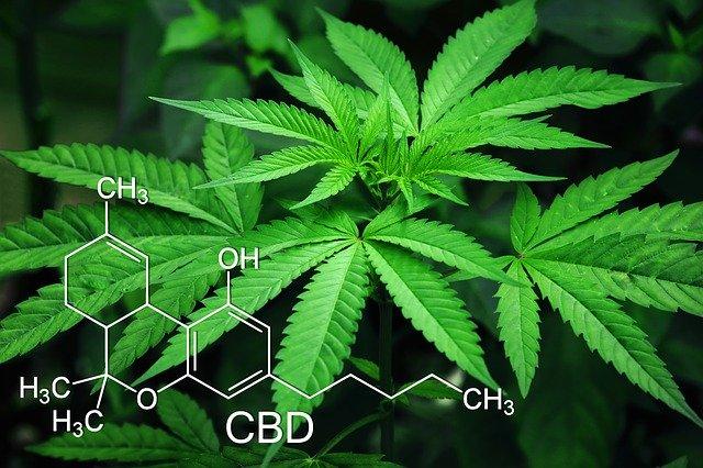 marijuana-3678222_640